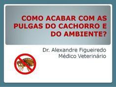Dicas Boas pra Cachorro !: COMO ACABAR COM AS PULGAS DO CACHORRO E DO AMBIENTE?