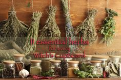 Which 11 herbs, spices and plants should not miss from a Witch's cupboard? - Magical Recipes Online