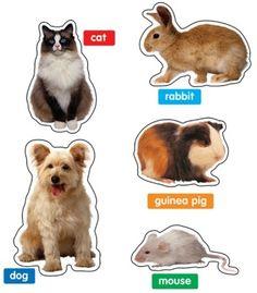Photographic Pets Bulletin Board Set - Carson Dellosa Publishing Education Supplies