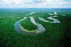 """Two days ago, on World's Forest Day, Google Maps debuted """"Street View"""" for the Amazon Basin, which compiles ground-level photography of forests, tributaries, and villages, giving users a front-row ticket to explore the Rio Negro reserve."""
