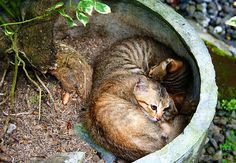 Gira Desai Photography for sale at Fine Art America. Sleeping Kittens at a coffee plantation in Bali, Indonesia