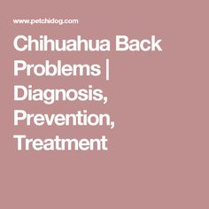 Signs, symptoms, diagnosis, prevention and treatment of Chihuahua back problems. Intervertebral Disc, Chihuahua, Chihuahua Dogs, Chihuahuas