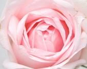 """The Color Pink - """"The color pink represents compassion, nurturing and love. It relates to unconditional love and understanding, and the giving and receiving of nurturing."""""""