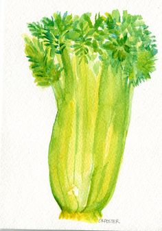 Celery Original Watercolor Painting Small by SharonFosterArt