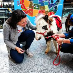 These miniature horses are calming passengers at Cincinnati's airport | Travel + Leisure