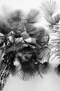 Amazing palm trees black and white photgraphy! Foto Picture, Photo D Art, Arte Yin Yang, Theme Nature, Jolie Photo, Black And White Pictures, Pics Art, Beach Photography, Shades Of Grey