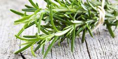Il rosmarino non è soltanto una pianta ad uso strettamente culinario, è in fatti un erba officinale estremamente utile e dalle spiccate proprietà antiossidanti. Il rosmarino è utilizzato fin dall'antichità per migliorare la memoria e la concentrazione.  Un infuso al rosmarino è un validissimo aiuto in caso di gonfiore addominale e cattiva digestione..