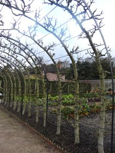 garden design - Or this one I could use 4 trees instead of 2 with the other method 4 varieties then Espalier pruning fruit trees The art of taming Nature Potager Garden, Garden Trellis, Fruit Garden, Edible Garden, Vegetable Garden, Espalier Fruit Trees, Trees And Shrubs, Farm Gardens, Outdoor Gardens