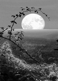 """greatest-pictures-on-earth: """"Spiderweb Moon, Fawler, England """""""" """" Beautiful Moon, Beautiful World, Beautiful Places, Beautiful Pictures, Peaceful Places, Night Photography, Art Photography, Amazing Photography, Landscape Photography"""