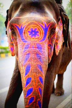Holi Festival Painted Elephant, India