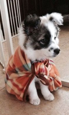 ♥ Dog Stuff ♥  Who can resist a puppy in a shawl?