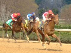 Horse Racing at Oaklawn by ridin_tha_blue, via Flickr