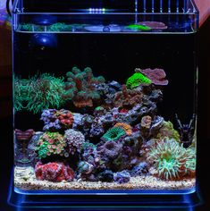 Coral Reef Aquarium, Nano Aquarium, Marine Aquarium, Aquarium Fish Tank, Fish Aquariums, Aquarium Ideas, Saltwater Fish Tanks, Saltwater Aquarium, Planted Aquarium