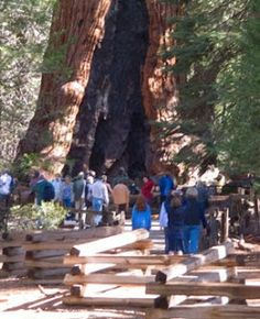 """Day hikers can see some of the world's largest trees – a few towering more than 20 stories high – during a walk through the Mariposa Grove of Giant Sequoias in Yosemite National Park. Learn more about this and other great trails in """"Best Sights to See at America's National Parks"""": http://www.amazon.com/Sights-Americas-National-Parks-Hittin-ebook/dp/B018W7Y288"""