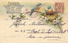 Vintage: postcard- Postkarte:  bird in nest..