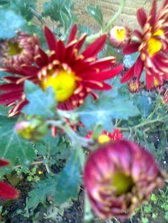 Adriana  Hobby: Grădina în noiembrie
