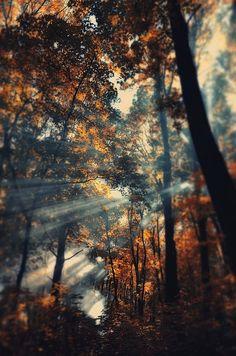 Autumn Sun Rays, Ukraine