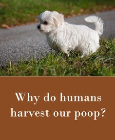 Why do humans harvest our poop.