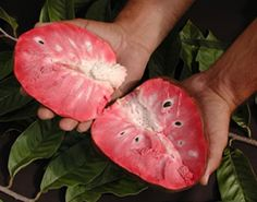 Cherimoya Fruit pink inside, Sour Sop white & fleshy inside, Sweet Sop and other varieties of delicious fruits.