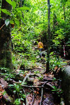Après un trop court séjour dans la jungle du TAMAN NEGARA, nous nous sommes dirigés vers les ILES PERENTHIAN. Ce sont deux îles situées à l'est de la MALAISIE. La plus grande PULAU BESAR, est…