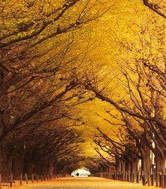 otoño dorado- golden autumn - autunno dorato - золотой осень