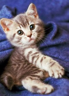 Today's cutest kitten award goes to…..