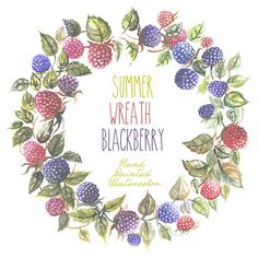 Summer Wreath Blackberries Watercolour Clipart Hand Drawn. DIY elements, invite, transparent, digital png