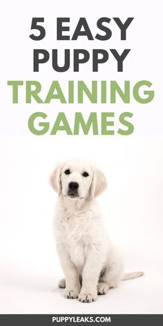 May 2019 - Looking for some fun games to play with your puppy? These puppy training games are great for teaching your dog some basic manners and impulse control. Puppy Training Tips, Training Your Dog, Potty Training, Obedience Training For Dogs, Brain Training, Puppy Care, Dog Care, Bond, Puppy House