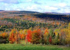 Magnifique tableau automnal. Au loin, l'ombre des nuages court sur les collines encore verdoyantes.