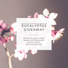 @curiouscountry posted to Instagram: ***It's GIVEAWAY Time!!*** ENTER TO WIN THIS EUCALYPTUS BUNCH!! Super easy to enter-- 1- FOLLOW @curiouscountrycreations 😀 2- LIKE this post ❤ 3- TAG a Friend (one entry per tag, no limit!) 😍 4- BONUS if you SHARE THIS POST!! (Will Ship to the US lower 48 States) Winner will be chosen on March 1, 2021, 12pm MST #driedflowers #driedplants #flowerlovers #homedecor #driedflowerdesign #floraldesign #flowerarrangement #diyhomedecor