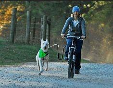 Springer Bike Attachment for Dogs - Dog Bike Training Bike Attachment For Dog, Regional, Biking With Dog, Mountain Bike Trails, Online Pet Supplies, Dog Park, Pet Accessories, Pet Shop, Dog Owners