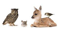 Kinderkamer ideeën - 10 leuke ideeën om de kinderkamer op te knappen Camping Stuff, Kangaroo, Om, Bird, Animals, Baby Bjorn, Animais, Animales, Animaux