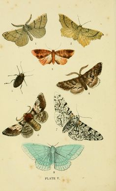 The common moths of England (1870).