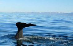 Whale watching, Kaikoura, New Zealand.