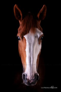 www.pegasebuzz.com | Equestrian photography : Lily Nedolya