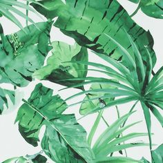 "Valenzuela 33' x 20.8"" Tropical Natural Leaves Wallpaper Roll"