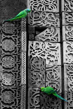 Parrots on the wall at Qutub Minar by Ann Kotantoulas, via Flickr