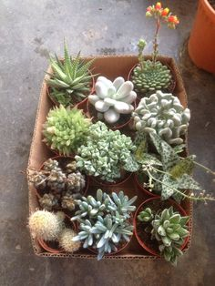 Brought some new cactus and succulents