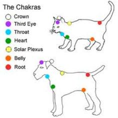 Animals and plants respond exceptionally well to Reiki Healing