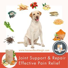 All natural, targets pain & inflammation while improving movement & mobility. Green Lipped Mussel, Willow Bark, Cute Dog Photos, Dog Games, Dog Care Tips, Pain Management, Pet Health, Health And Wellbeing, Pain Relief