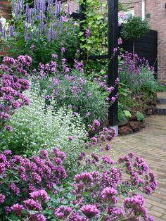 Backyard Garden With Flowering Hesperis Plants : Flowering Hesperis Plants In The Garden plants flowers plants ideas plants landscaping plants perennials plants uk plants vegetable Garden Borders, Garden Paths, Garden Landscaping, Garden Arbor, Landscaping Ideas, Verbena, Design Jardin, Garden Design, Fence Design