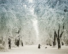 Regram from @nightlifedenver  Beautiful scene in Cheesman Park   #denver #colorado #coloradolife #blizzard2016 #snow #winterwonderland #ohwaititsspring #spring #frozen #snowday #snowpocalypse #march #springtime #coldaf #whiteout #letitsnow #blizzard #yas #coliving #denverliving #snowschmo #springbreak #cheesmanpark #beautiful #peaceful #nature by andrealg17