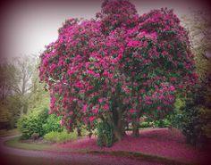 trees&flowers