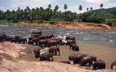 sri lanka photos free download | Related Pictures sri lanka wallpaper download sri murugan free ...