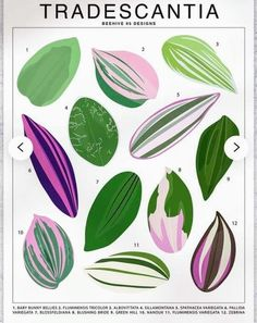 Foliage Plants, Potted Plants, Wondering Jew Plant, Baby Bunnies, Green Plants, House Plants, Plant Leaves, Bride, Floral
