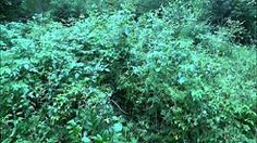 inovace technických a přírodovědných předmětů - YouTube Herbs, Youtube, Plants, Herb, Plant, Youtubers, Youtube Movies, Planets, Medicinal Plants
