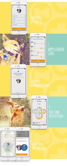 Easy-to-use Pet Activity Tracker Tag and APP by Pettag+ (Pet Tag Plus) — Kickstarter