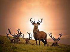 Image result for wild animals that amaze