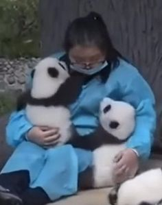 Professional panda hugger = dream job