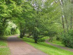 Parc de Tigery - Chemins parallèles